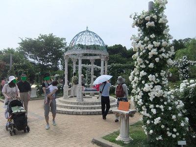 京成バラ園3.jpg